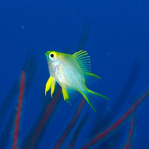 海水魚イメージ画像